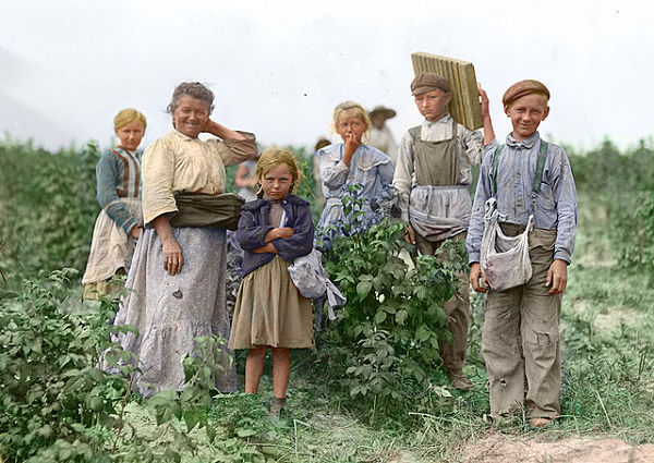Polish berry pickers