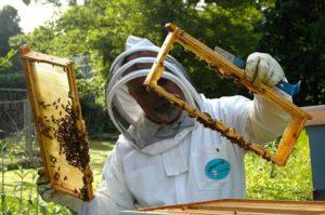 beekeeper-
