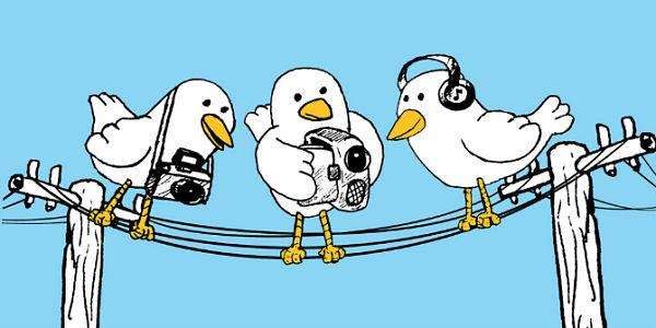 birds-of-a-feathe